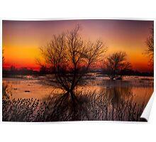 Wetlands Dawn Poster