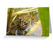 Frog in the Swamp! Greeting Card