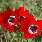 Reds of Nature by Nira Dabush