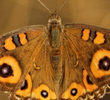 Meadow Argus butterfly Sticker