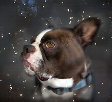 Star Gazer by Susan Werby