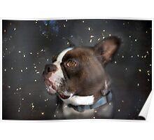 Star Gazer Poster