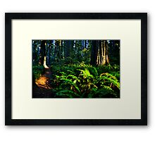 Jedediah Redwood Sun Splash Framed Print