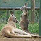 Do I Have A Pouch Mum? by Ginny York