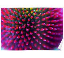 Echinacea flower macro Poster