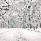 Central Park - Poet's Walk - New York City by Vivienne Gucwa