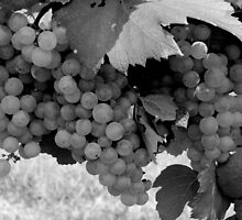 Grapevine - Full  ^ by ctheworld