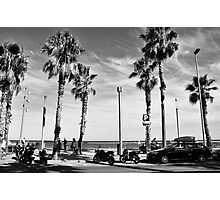 Palm Trees in the Wind Photographic Print