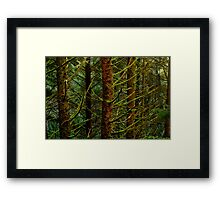 Forest for the Trees Framed Print