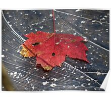Leaf on Water (ice) 24 Poster