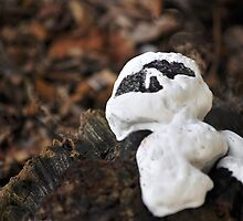 Casper the fungus...for Manon!!! by Poete100