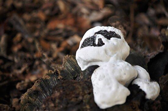 Casper the fungus...for Manon!!! by Poete100