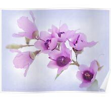 Mint Bush Flowers Poster