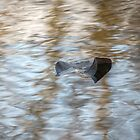 Leaf on water 45 by ChuckBuckner