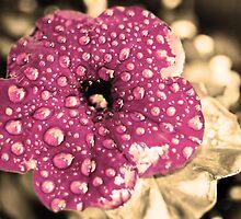 Summer Rain by Emily Rose