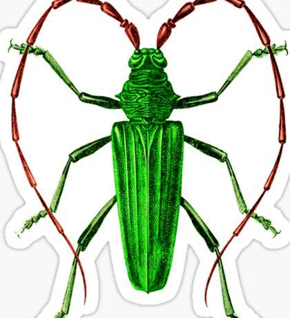 Longhorn Beetle Sticker