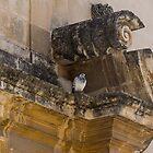 Sophisticated Baroque Bird Perch by Georgia Mizuleva