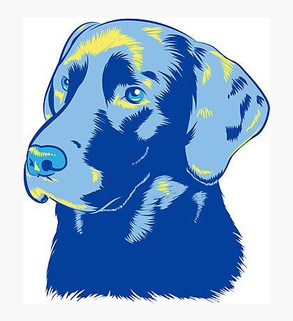 Labrador Retriever Photographic Print