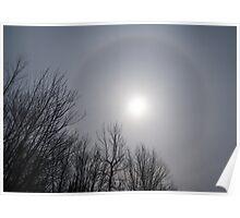 Sun Halo Through the Trees Poster