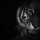 Tigers Eyes by liberthine01
