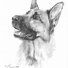 German shepherd drawing by Mike Theuer