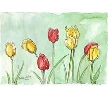 If I was a Tulip Photographic Print