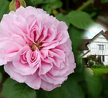 Rose Cottage by hootonles