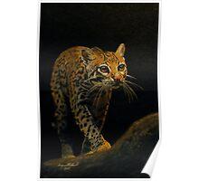 Ocelot Prowl Poster