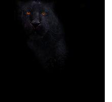 Eyes Of The Jaguar by Darren Wilkes
