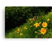 Flowers, South Korea Canvas Print