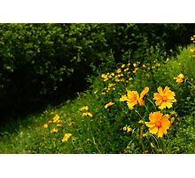 Flowers, South Korea Photographic Print