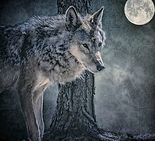 Lone Wolf by Tarrby