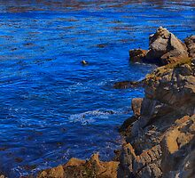 Point Lobos, California PCH by ltm3photography