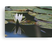 Dragon Lily  Canvas Print