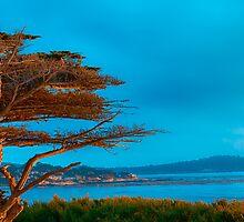 Carmel Cypress by ltm3photography
