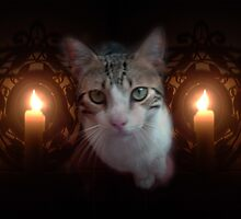 Cat with candles  by shoppy76