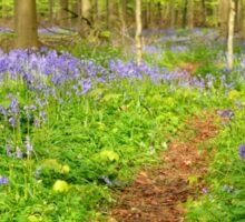 Flower carpet of wild hyacinths in the forest Sticker