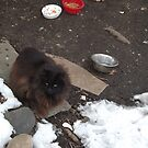 A Cat in the Snow, Brunswick Community Garden, Jersey City, New Jersey by lenspiro