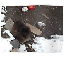 A Cat in the Snow, Brunswick Community Garden, Jersey City, New Jersey Poster