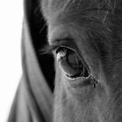 14.12.2015: Horse's Look by Petri Volanen