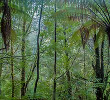 Tarkine Forest by Candice84