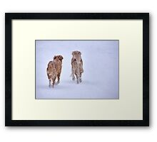 Romancing the snow Framed Print