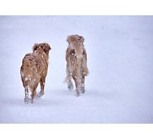 Romancing the snow Photographic Print