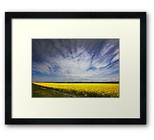 Canola in Spring Framed Print