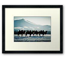 Bactrial Camels Framed Print