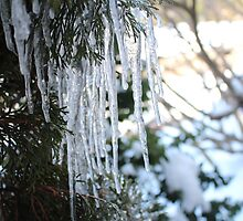 Tree Icicles by kaitlyns-photos