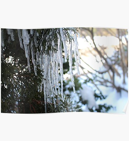 Tree Icicles Poster