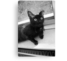Black cat being cute Canvas Print