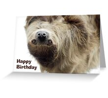 Sloth Birthday Card Greeting Card