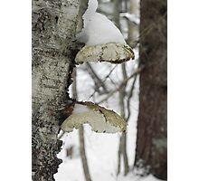 Snow Cap Photographic Print